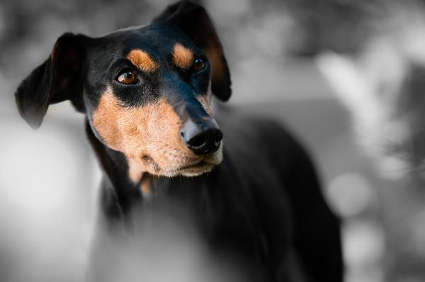 Prayer for Sick Animals- Pet Prayers